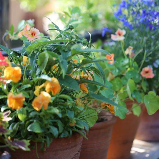 Sky Ranch Lodge Flowers